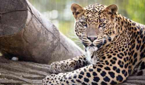 Dagje Dinopark Landgoed Tenaxx van Actievandedag